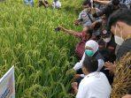 Gubernur Jawa Timur bersama Bupati Sugiri Sancoko melihat padi varietas unggul di Desa Semanding Ponorogo