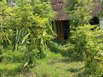 Kampung Mati di Dusun Sumbulan Plalanan Jenangan Ponorogo diserbu warga
