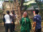 Almarhum Saudi saat masih menggantung di Pohon Trembesi di belakang rumahnya